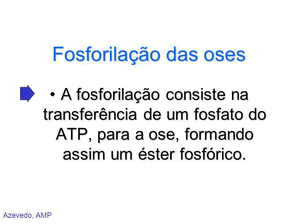Azevedo, AMP Fosforilação das oses A fosforilação consiste na transferência de um fosfato do ATP, para a ose, formando assim um éster fosfórico.A fosf