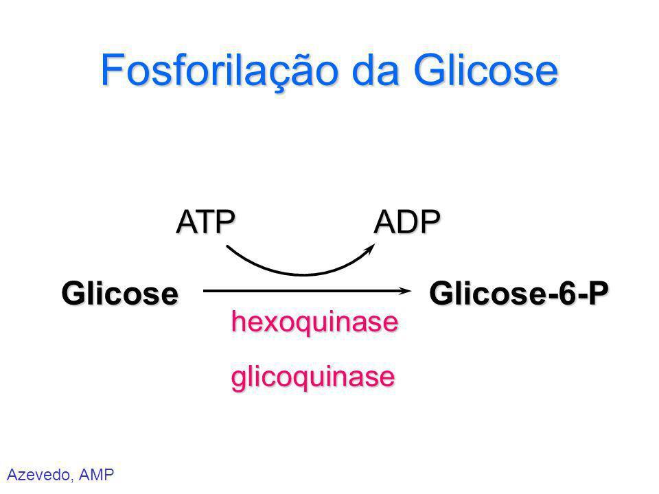 Azevedo, AMP Fosforilação da Glicose Glicose ATP hexoquinase glicoquinase ADP Glicose-6-P