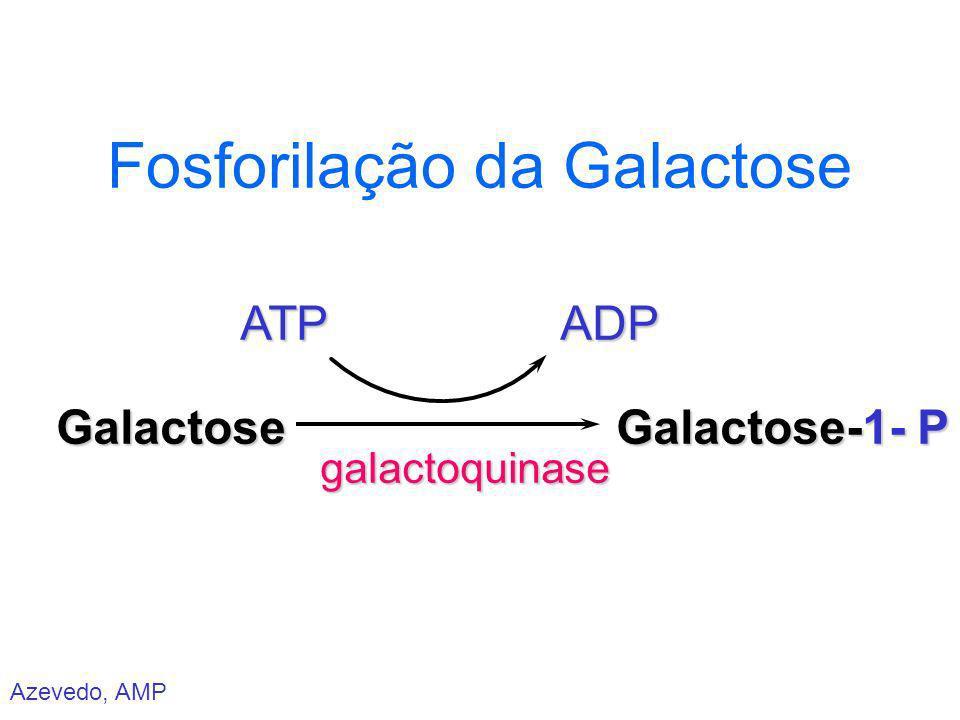 Azevedo, AMP Fosforilação da Galactose Galactose ATP galactoquinase ADP Galactose-1- P