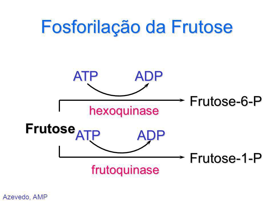 Azevedo, AMP Fosforilação da Frutose Frutose ATPATP hexoquinasefrutoquinase ADPADP Frutose-6-PFrutose-1-P