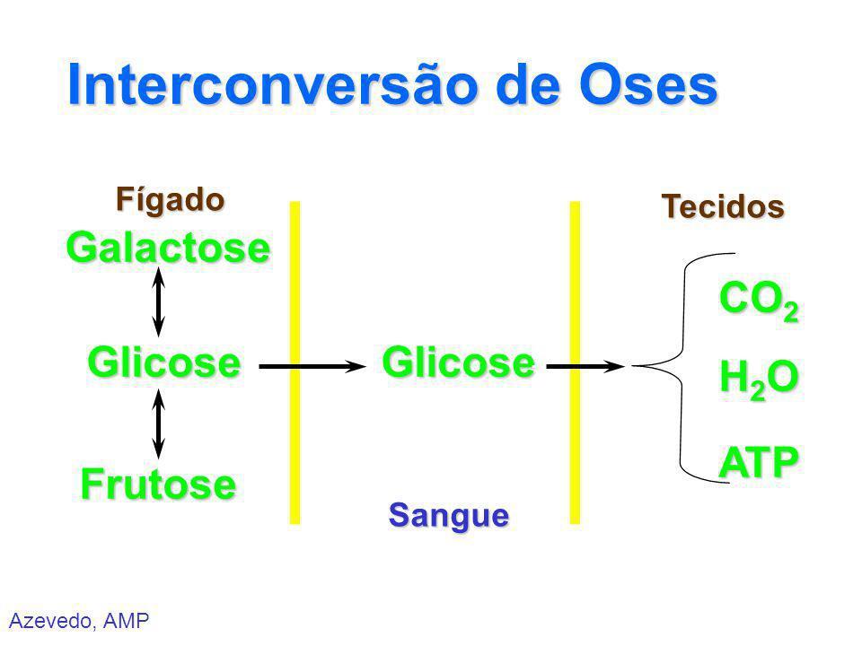 Azevedo, AMP Interconversão de Oses Fígado Sangue Tecidos Glicose Galactose Frutose Glicose ATP CO 2 H2OH2OH2OH2O