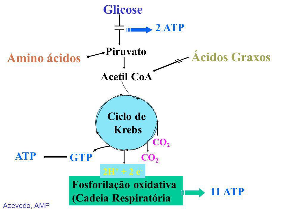 Azevedo, AMP Glicose Amino ácidos Ácidos Graxos Piruvato Acetil CoA Fosforilação oxidativa (Cadeia Respiratória GTP CO 2 Ciclo de Krebs 2H + + 2 e - 1