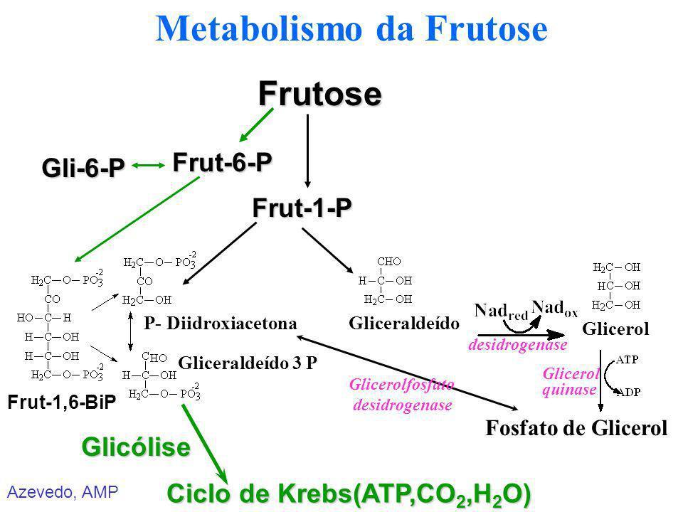 Azevedo, AMP Metabolismo da FrutoseFrut-6-P Ciclo de Krebs(ATP,CO 2,H 2 O) Glicólise Frut-1-P Frutose P- DiidroxiacetonaGliceraldeído Glicerol Fosfato