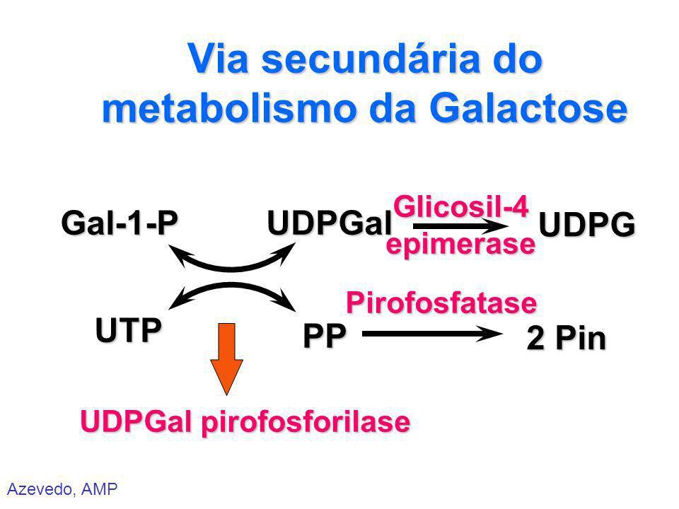 Azevedo, AMP Via secundária do metabolismo da Galactose Gal-1-P Gal-1-P UTP UTP UDPGal pirofosforilase PP PPUDPGalUDPG Glicosil-4epimerase Pirofosfata
