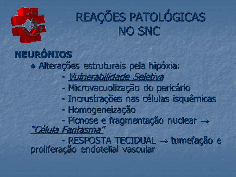 REAÇÕES PATOLÓGICAS NO SNC REAÇÕES PATOLÓGICAS NO SNC NEURÔNIOS Alterações estruturais pela hipóxia: Alterações estruturais pela hipóxia: - Vulnerabil