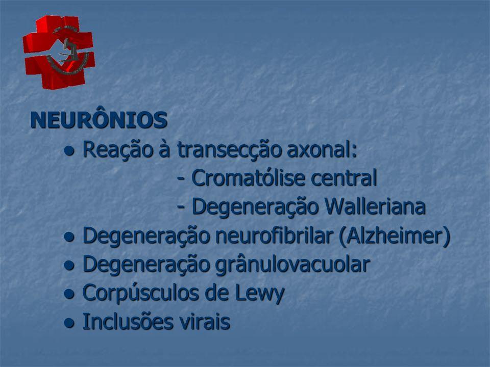 NEURÔNIOS Reação à transecção axonal: Reação à transecção axonal: - Cromatólise central - Degeneração Walleriana Degeneração neurofibrilar (Alzheimer)