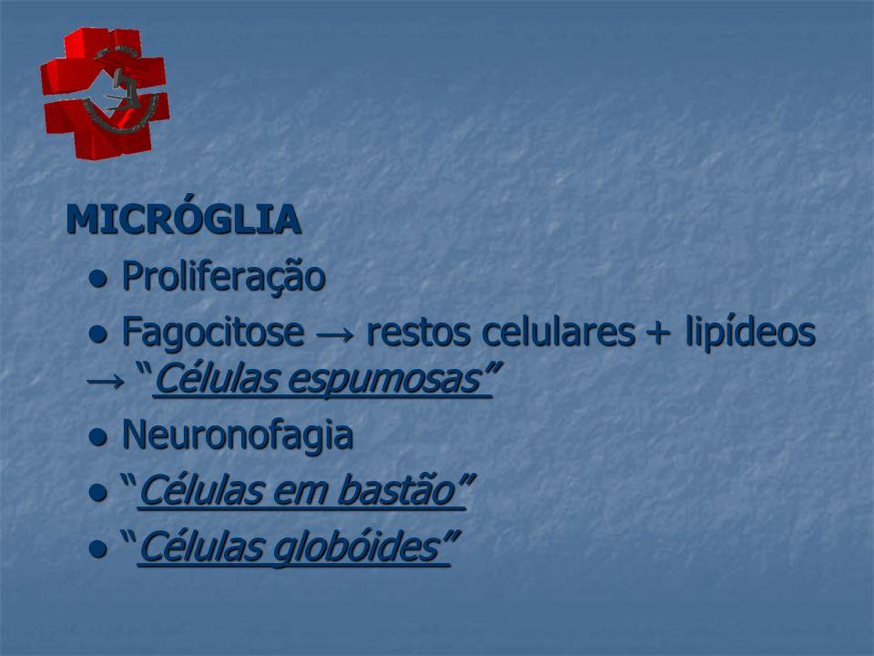 MICRÓGLIA MICRÓGLIA Proliferação Proliferação Fagocitose restos celulares + lipídeos Células espumosas Fagocitose restos celulares + lipídeos Células