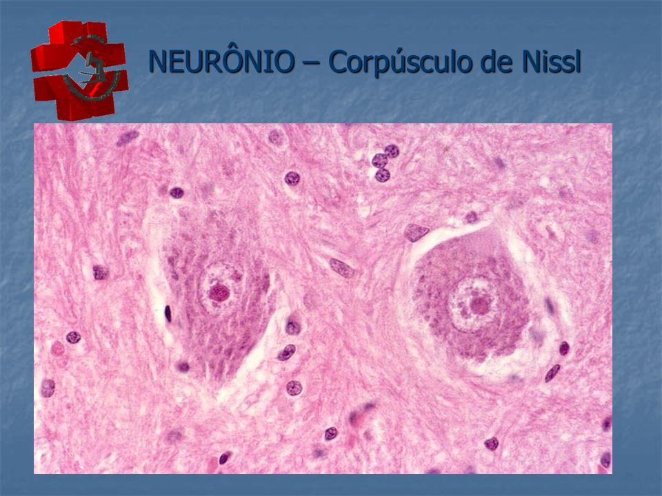 NEURÔNIO – Corpúsculo de Nissl