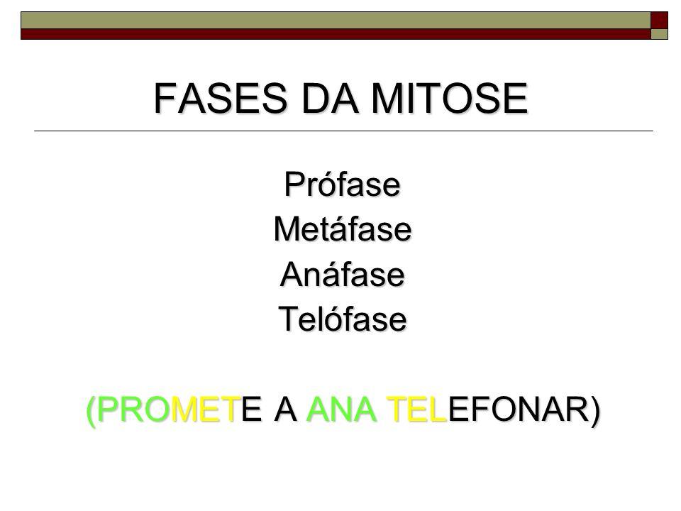 FASES DA MITOSE PrófaseMetáfaseAnáfaseTelófase (PROMETE A ANA TELEFONAR)