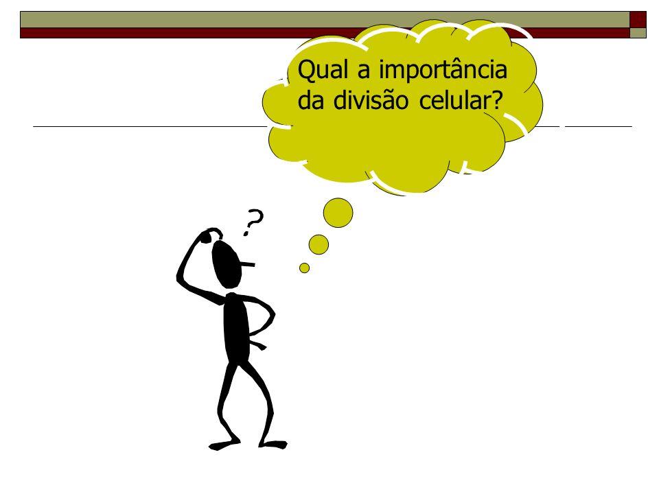 Qual a importância da divisão celular?