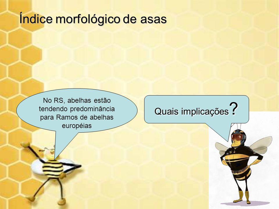 Quais implicações ? No RS, abelhas estão tendendo predominância para Ramos de abelhas européias