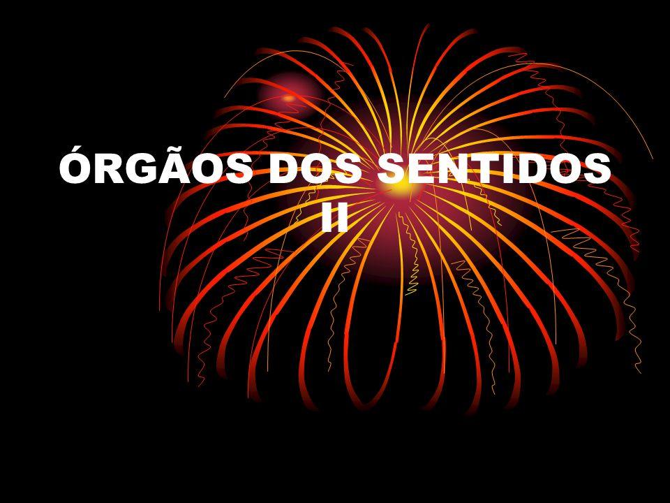 ÓRGÃOS DOS SENTIDOS II
