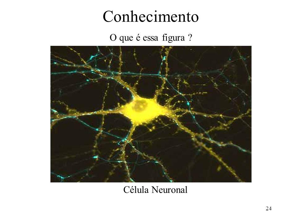 24 Conhecimento O que é essa figura ? Célula Neuronal