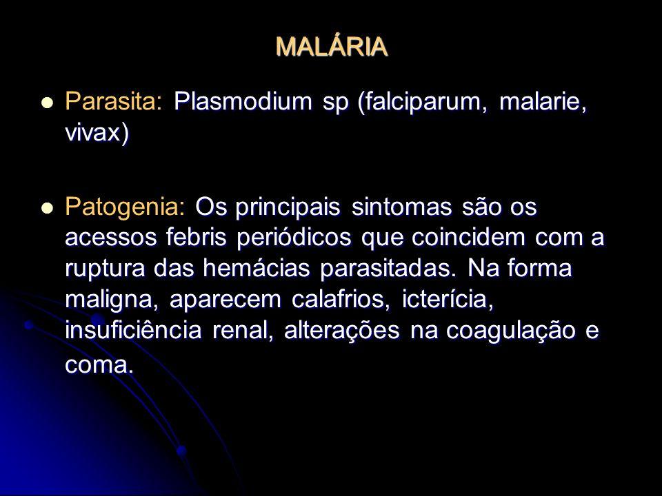 MALÁRIA Plasmodium sp (falciparum, malarie, vivax) Parasita: Plasmodium sp (falciparum, malarie, vivax) Os principais sintomas são os acessos febris p