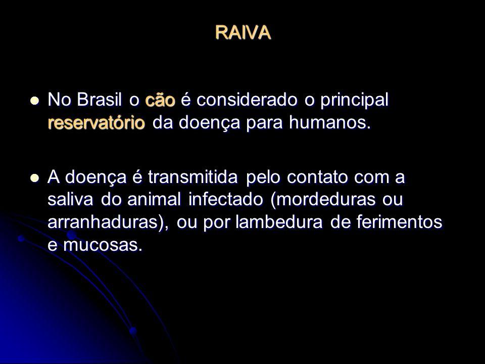 RAIVA No Brasil o cão é considerado o principal reservatório da doença para humanos. No Brasil o cão é considerado o principal reservatório da doença