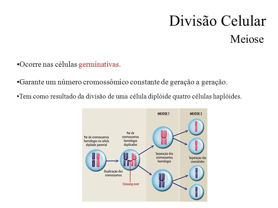Divisão Celular Meiose Ocorre nas células germinativas. Garante um número cromossômico constante de geração a geração. Tem como resultado da divisão d