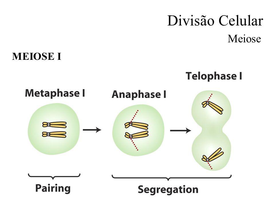 Divisão Celular Meiose MEIOSE I