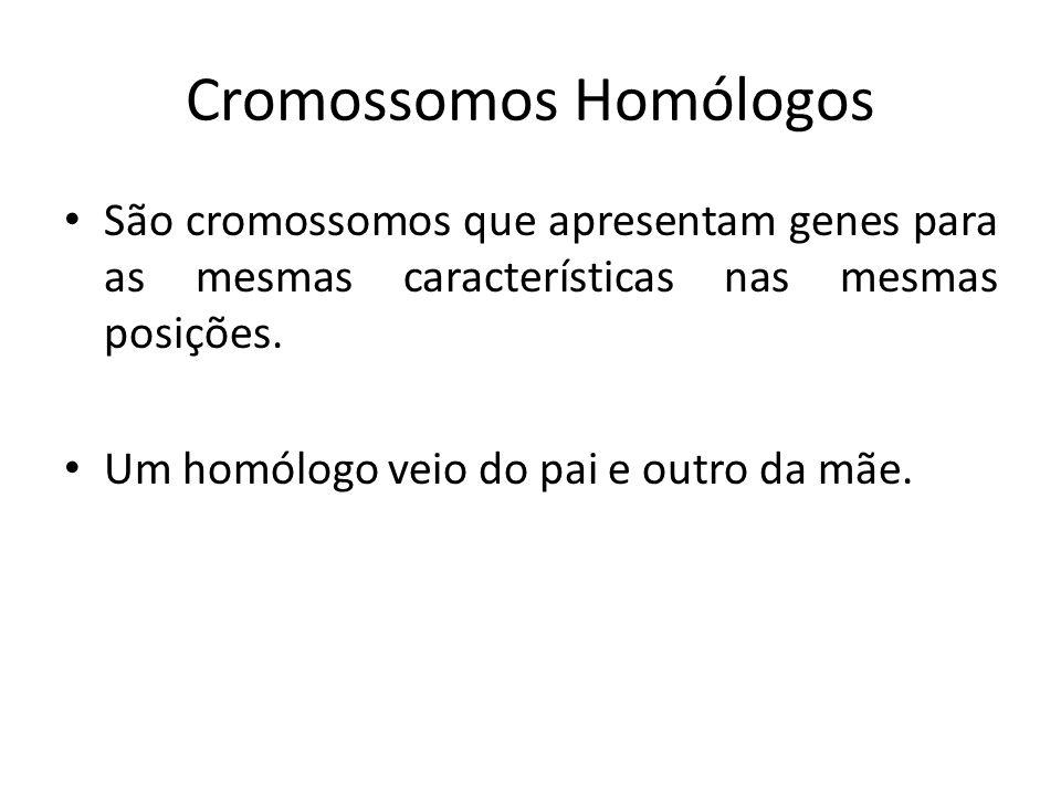 Cromossomos Homólogos São cromossomos que apresentam genes para as mesmas características nas mesmas posições. Um homólogo veio do pai e outro da mãe.
