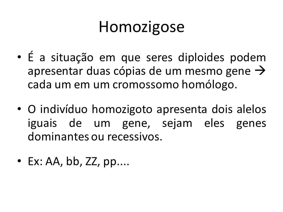 Homozigose É a situação em que seres diploides podem apresentar duas cópias de um mesmo gene cada um em um cromossomo homólogo. O indivíduo homozigoto