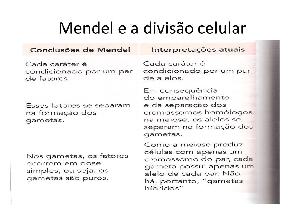 Mendel e a divisão celular