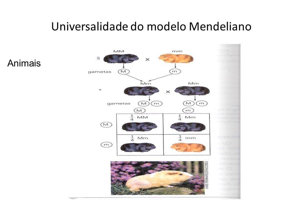 Universalidade do modelo Mendeliano Animais