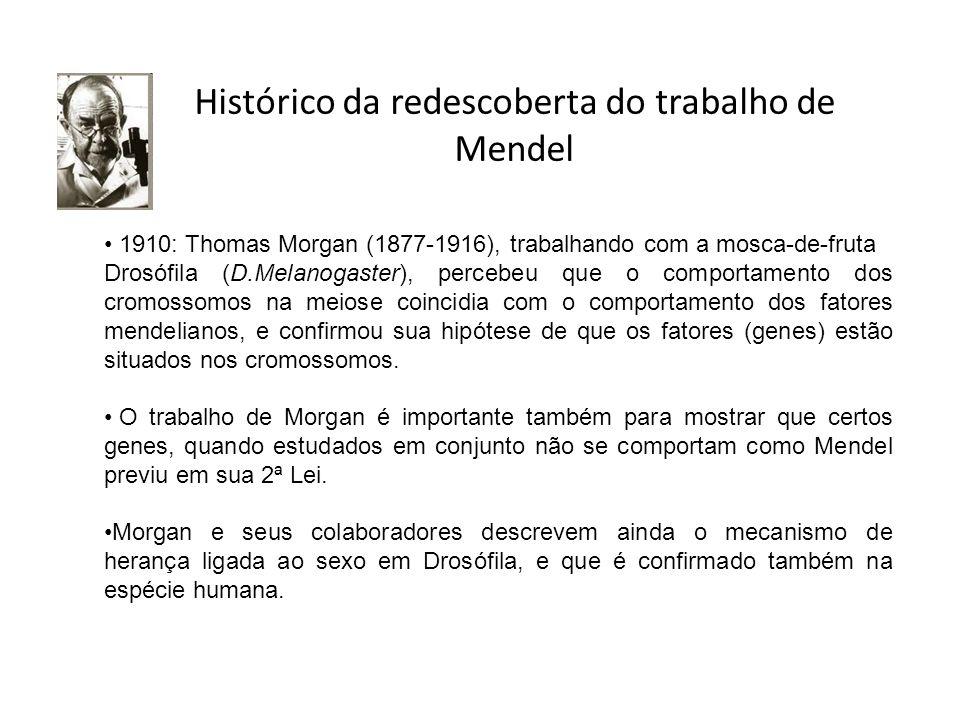 Histórico da redescoberta do trabalho de Mendel 1910: Thomas Morgan (1877-1916), trabalhando com a mosca-de-fruta Drosófila (D.Melanogaster), percebeu
