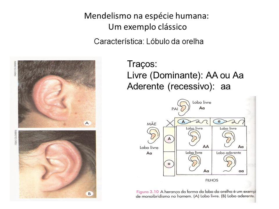 Mendelismo na espécie humana: Um exemplo clássico Traços: Livre (Dominante): AA ou Aa Aderente (recessivo): aa Característica: Lóbulo da orelha