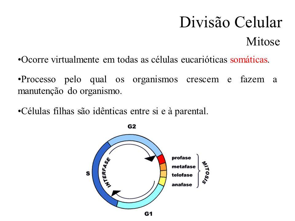 Divisão Celular Mitose Ocorre virtualmente em todas as células eucarióticas somáticas. Processo pelo qual os organismos crescem e fazem a manutenção d