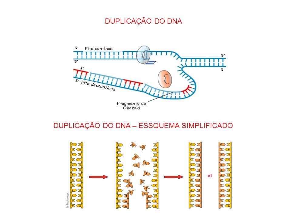 DUPLICAÇÃO DO DNA DUPLICAÇÃO DO DNA – ESSQUEMA SIMPLIFICADO