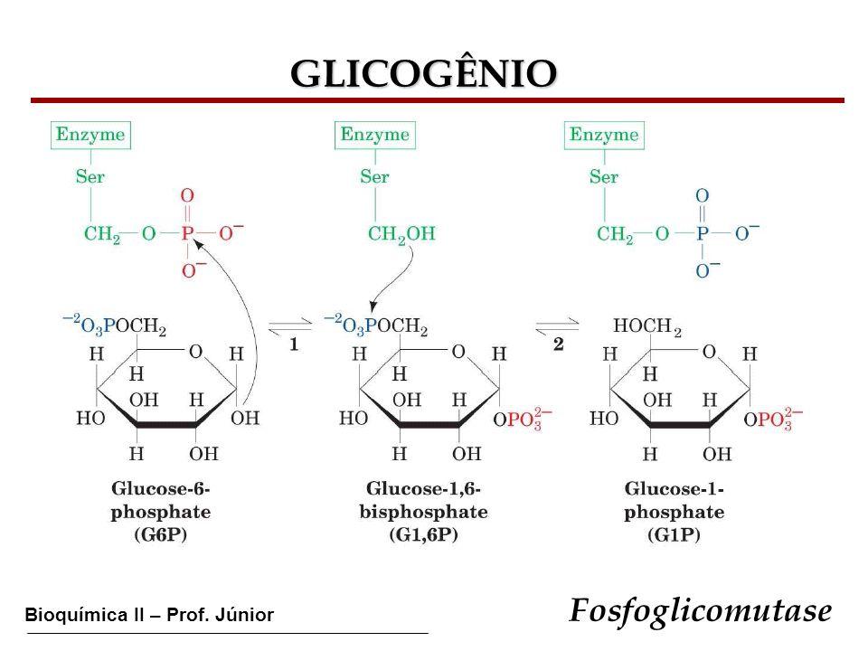 Bioquímica II – Prof. Júnior GLICOGÊNIO Fosfoglicomutase