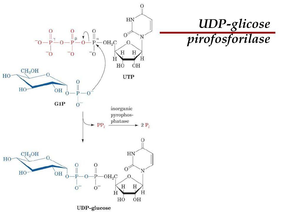 Bioquímica II – Prof. Júnior UDP-glicose pirofosforilase