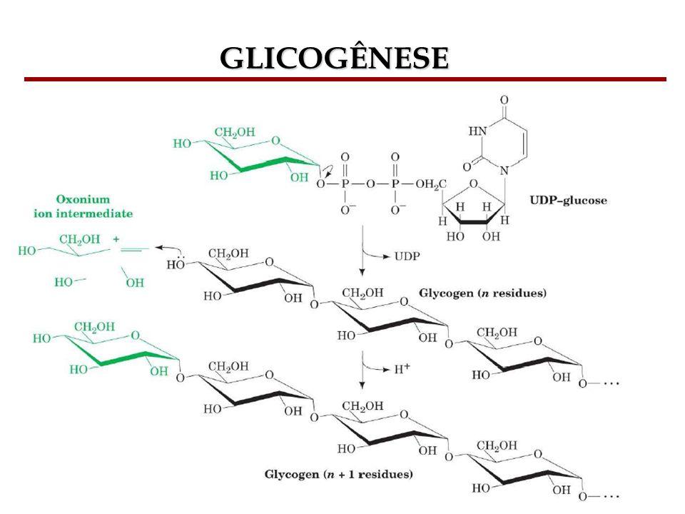 Bioquímica II – Prof. Júnior GLICOGÊNESE