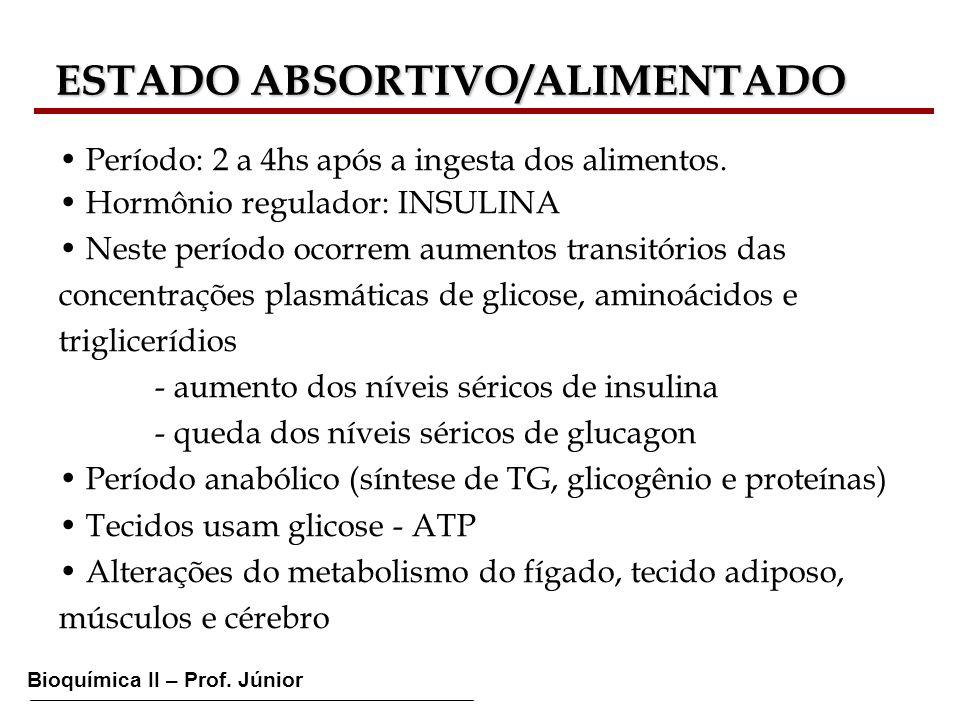 Bioquímica II – Prof. Júnior ESTADO ABSORTIVO/ALIMENTADO ESTADO ABSORTIVO/ALIMENTADO Período: 2 a 4hs após a ingesta dos alimentos. Hormônio regulador