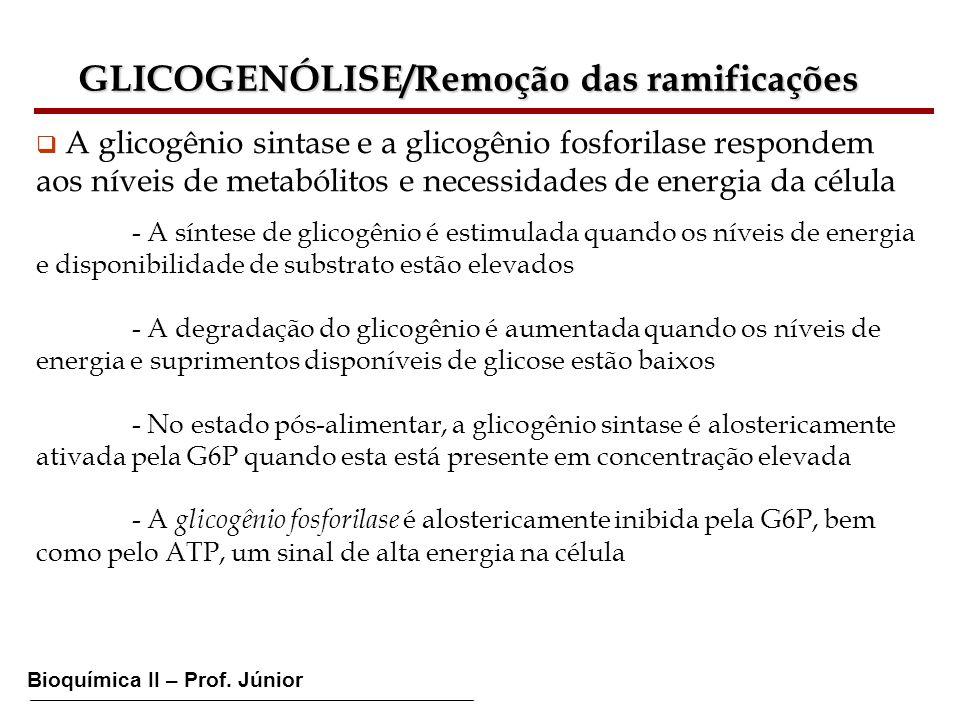 Bioquímica II – Prof. Júnior GLICOGENÓLISE/Remoção das ramificações A glicogênio sintase e a glicogênio fosforilase respondem aos níveis de metabólito