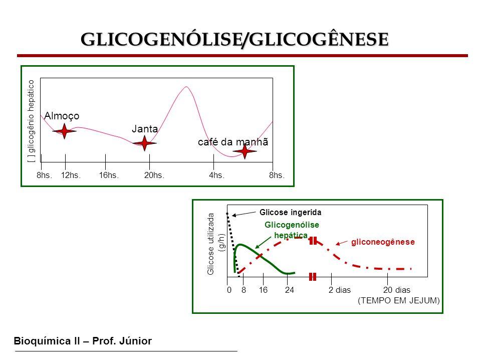Bioquímica II – Prof. Júnior GLICOGENÓLISE/GLICOGÊNESE [ ] glicogênio hepático 8hs. 12hs. 16hs. 20hs. 4hs. 8hs. Almoço Janta café da manhã Glicose uti