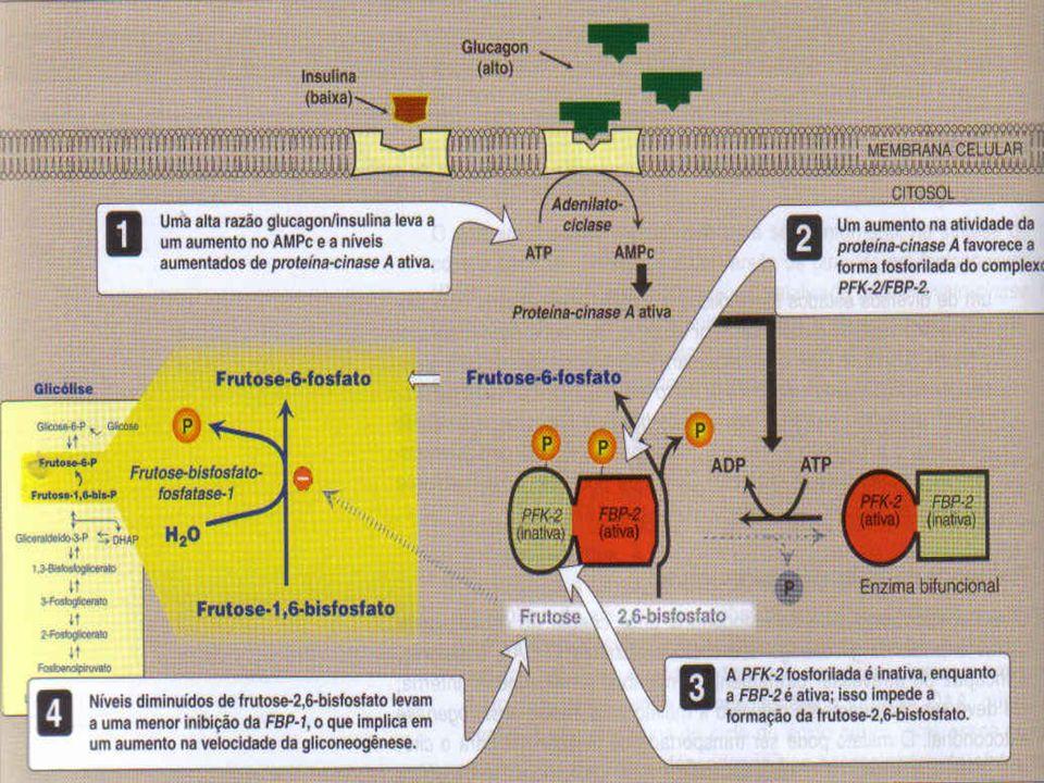 Bioquímica II – Prof. Júnior GLICONEOGÊNESE