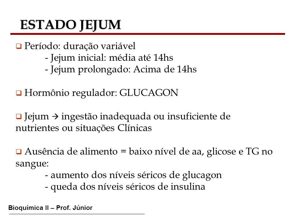 Bioquímica II – Prof. Júnior ESTADO JEJUM ESTADO JEJUM Período: duração variável - Jejum inicial: média até 14hs - Jejum prolongado: Acima de 14hs Hor