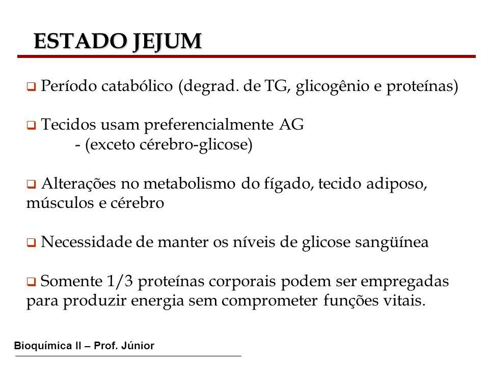 Bioquímica II – Prof. Júnior ESTADO JEJUM ESTADO JEJUM Período catabólico (degrad. de TG, glicogênio e proteínas) Tecidos usam preferencialmente AG -