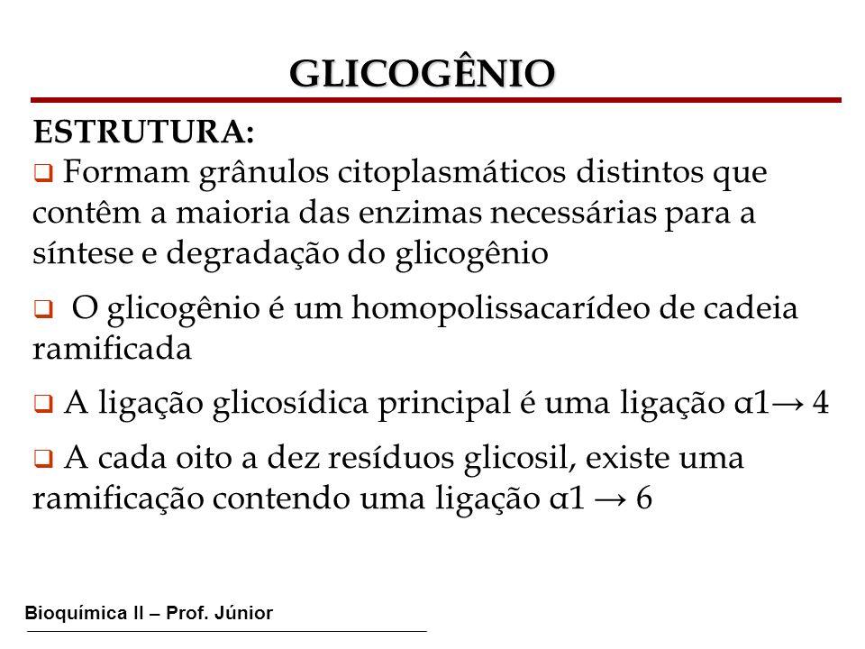 Bioquímica II – Prof. Júnior GLICOGÊNIO ESTRUTURA: Formam grânulos citoplasmáticos distintos que contêm a maioria das enzimas necessárias para a sínte