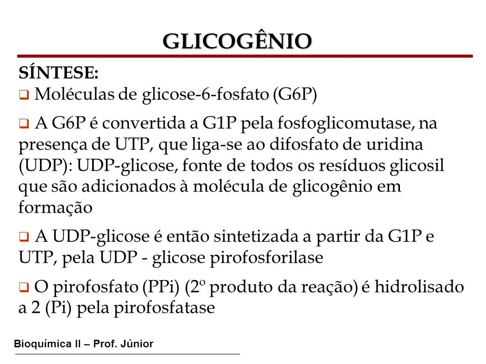 GLICOGÊNIO SÍNTESE: Moléculas de glicose-6-fosfato (G6P) A G6P é convertida a G1P pela fosfoglicomutase, na presença de UTP, que liga-se ao difosfato