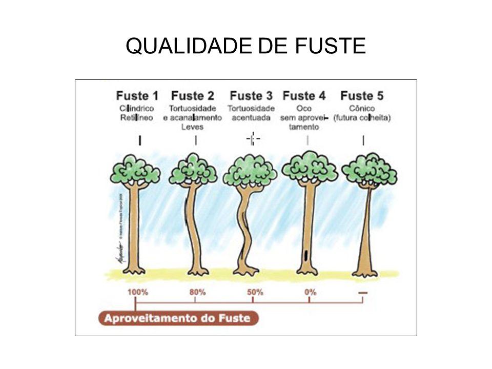 QUALIDADE DE FUSTE