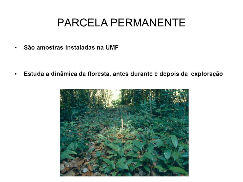 PARCELA PERMANENTE São amostras instaladas na UMF Estuda a dinâmica da floresta, antes durante e depois da exploração
