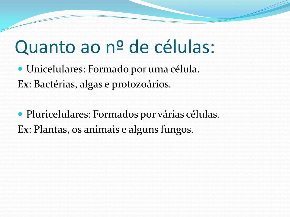 Quanto ao nº de células: Unicelulares: Formado por uma célula. Ex: Bactérias, algas e protozoários. Pluricelulares: Formados por várias células. Ex: P