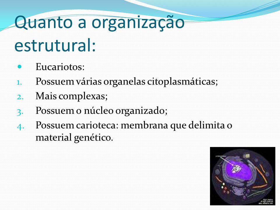 Quanto a organização estrutural: Eucariotos: 1. Possuem várias organelas citoplasmáticas; 2. Mais complexas; 3. Possuem o núcleo organizado; 4. Possue