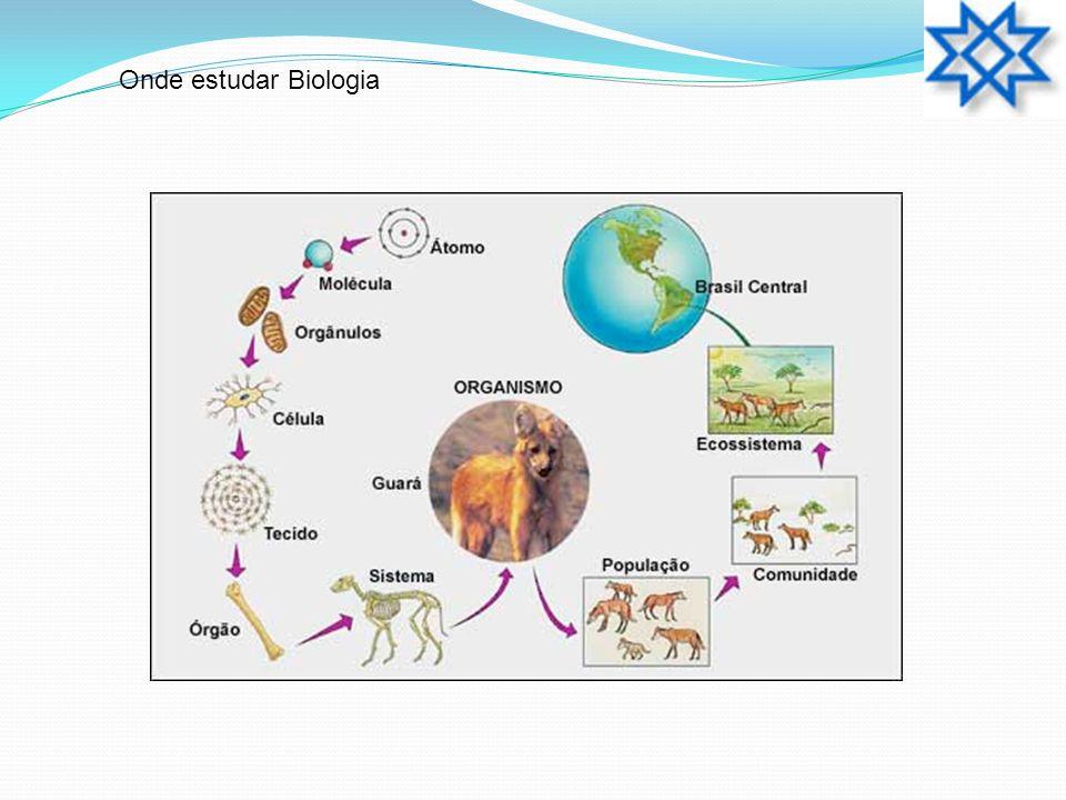 Quanto a organização estrutural: Eucariotos: 1.Possuem várias organelas citoplasmáticas; 2.