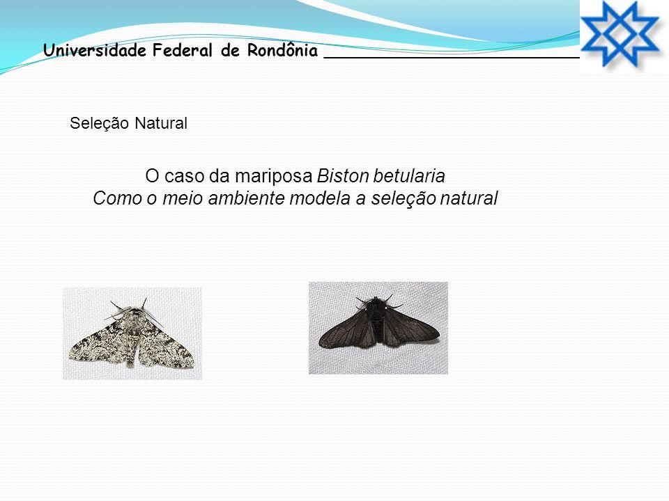 O caso da mariposa Biston betularia Como o meio ambiente modela a seleção natural Seleção Natural