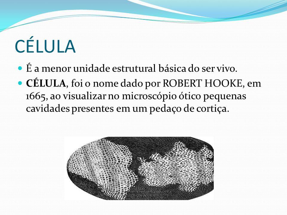 CÉLULA É a menor unidade estrutural básica do ser vivo. CÉLULA, foi o nome dado por ROBERT HOOKE, em 1665, ao visualizar no microscópio ótico pequenas