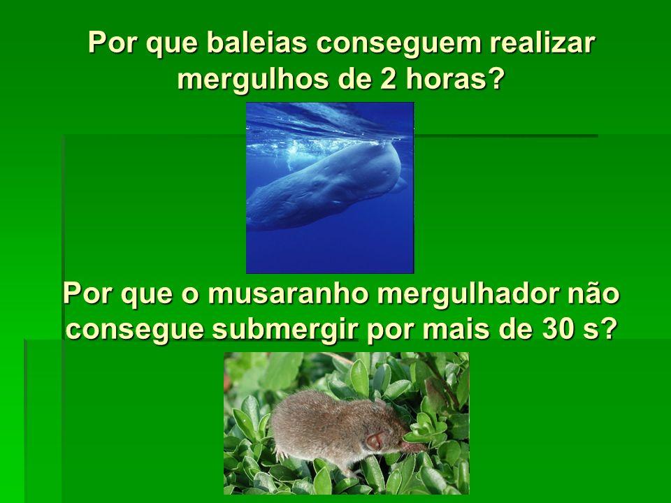 Por que baleias conseguem realizar mergulhos de 2 horas? Por que o musaranho mergulhador não consegue submergir por mais de 30 s?