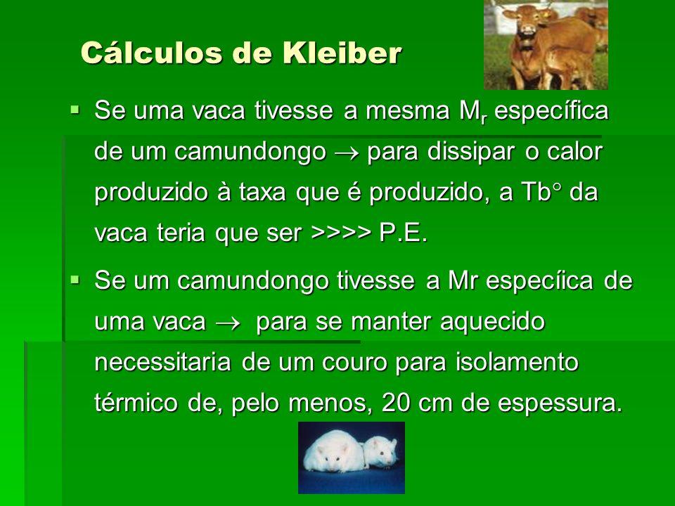Cálculos de Kleiber Se uma vaca tivesse a mesma M r específica de um camundongo para dissipar o calor produzido à taxa que é produzido, a Tb da vaca t