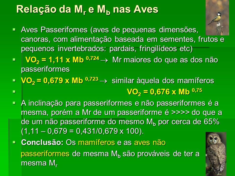 Relação da M r e M b nas Aves Aves Passerifomes (aves de pequenas dimensões, canoras, com alimentação baseada em sementes, frutos e pequenos invertebr